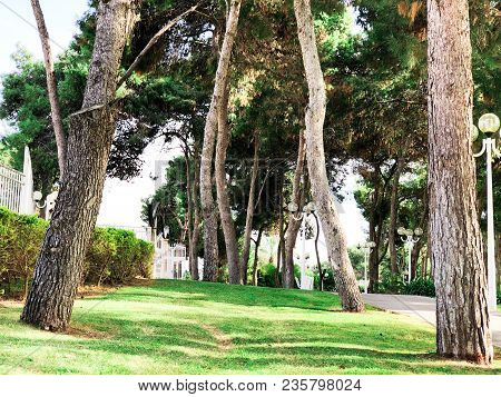 Green Park. Green Trees In Park. Sky And Sunny Day At The Park.the Park With Bunches Made Of Wood An
