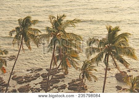 Beautiful Tropical Palm Trees Against The Background Of The Sea And Sun. Palm Trees On A Sunset Back