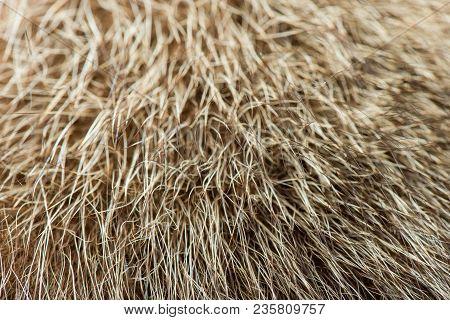 Fur Animal Close-up. Fur Texture. Fur. Natural Texture