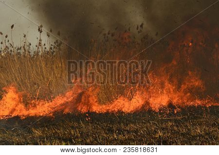 Coastal Zone Of Marsh Creek, Strong Smoke From Fire Of Liana Overgrowth. Spring Fires Of Dry Reeds D