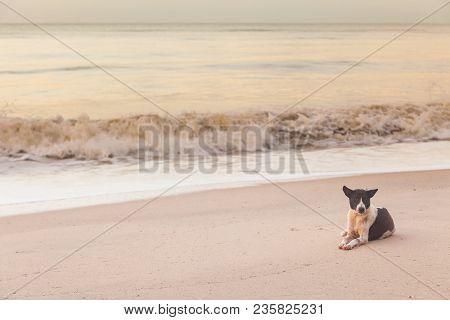 Thai Dog Sitting And Enjoying Seascape On The Sea Beach Peacefully