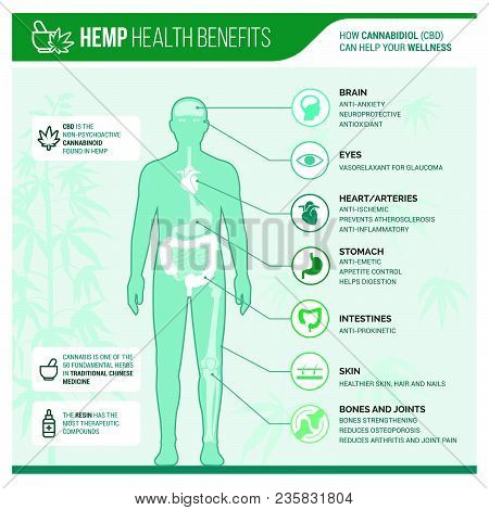 Medicinal Hemp Health Benefits Vector Infographic With Human Body And Icons