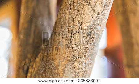 Details Of Bark Texture On A Decorative Tree.