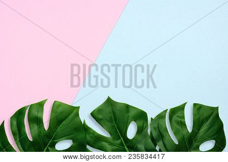 Tropical Palm Leaves On A Pastel Pink And Blue Background. Bottom Border. Minimal Nature. Flat Lay.