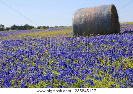 Lovely Spring Has Sprung In Brenham, Tx