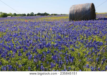 Lovely Spring Has Sprung In Brenham, Tx
