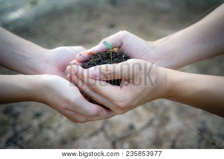 Close Up Human Hands Holding A Young Plant In Soil. Two Hands Of The Men Was Carrying Potting Seedli