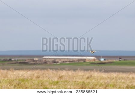 Yellow Green Nature And Camouflage Bird. Common Bird. Rostov State Atmospheric Reserve.