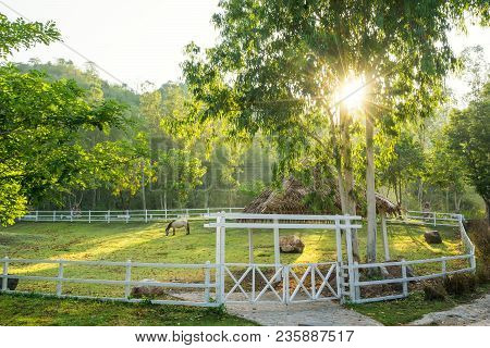Single Horse In Farm And Sun Light - Can Use To Display Or Montage On Product