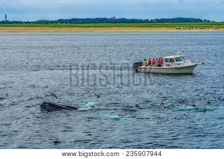 Provincetown, Cape Cod, Massachusetts, Us - August 15 2017 Boat, His Crew And Whale