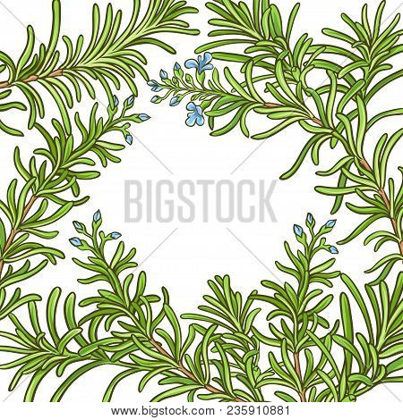 Rosemary Branch Vector Pattern On Whte Background