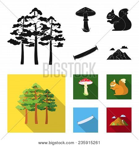 Pine, Poisonous Mushroom, Tree, Squirrel, Saw.forest Set Collection Icons In Black, Flat Style Vecto
