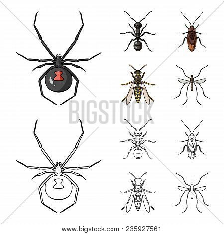 Spider, Ant, Wasp, Bee .insects Set Collection Icons In Cartoon, Outline Style Vector Symbol Stock I