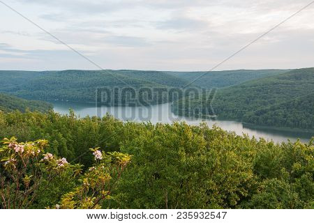 Mountain Laurel Flowers Blooming High In Pennsylvania Mountains Overlooking The Allegheny Reservoir.