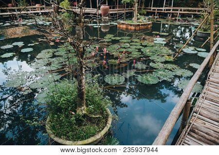 Beautiful Lotus Flowers In Pond And Wooden Footbridge, Hue, Vietnam