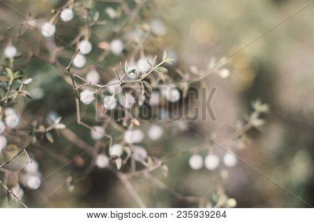 Larrea Tridentata Plant. Background With Creosote Bush. Desert Plant