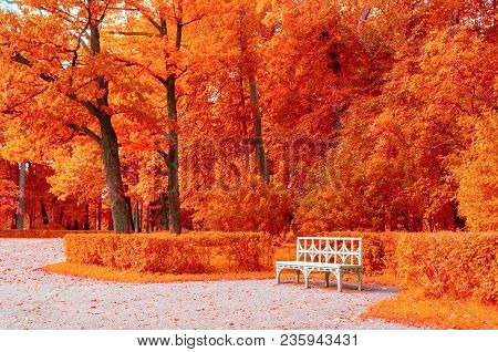 Autumn Colorful Landscape. White Bench In The Autumn Park Under Red Autumn Trees