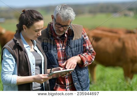 Couple of stock breeders using tablet in field