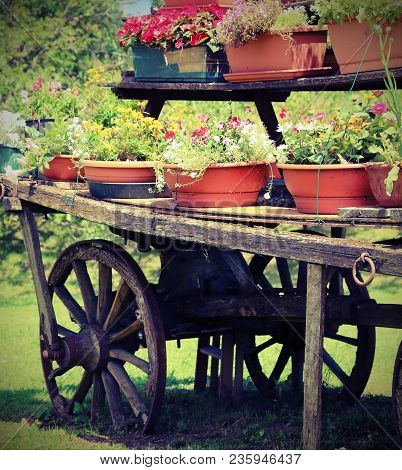 Old Wooden Wagon With Many Pots Of Flowers In Summer With Vintage Effect