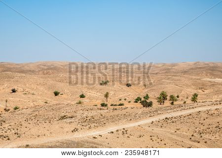 Beautiful View Of The Dry Desert With Hills, Palm Trees And Poor Vegetation At Noon