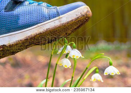 Shoe Treading On A Flower In Grass