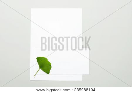 Blank Sheets Of Paper, Envelope And Ginkgo Leaf