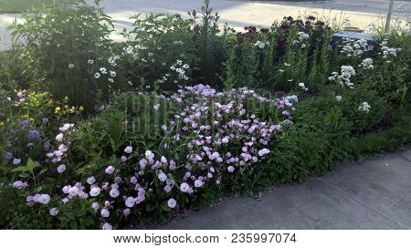 Garden Filled With Multiple Numerous Flowers In Summer