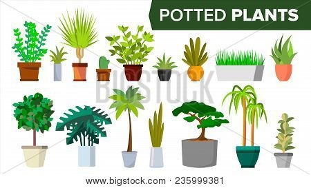 Potted Plants Set Vector. Indoor Home, Office Modern Style Houseplants. Green Color Plants In Pot. V