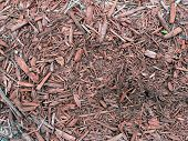 wood chip texture on the ground poster