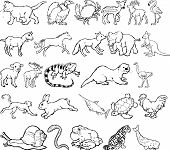 Illustration of Animal - Vector Format poster