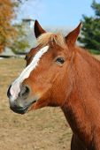 Brown Horse with whimsical inquisitive facial expression poster