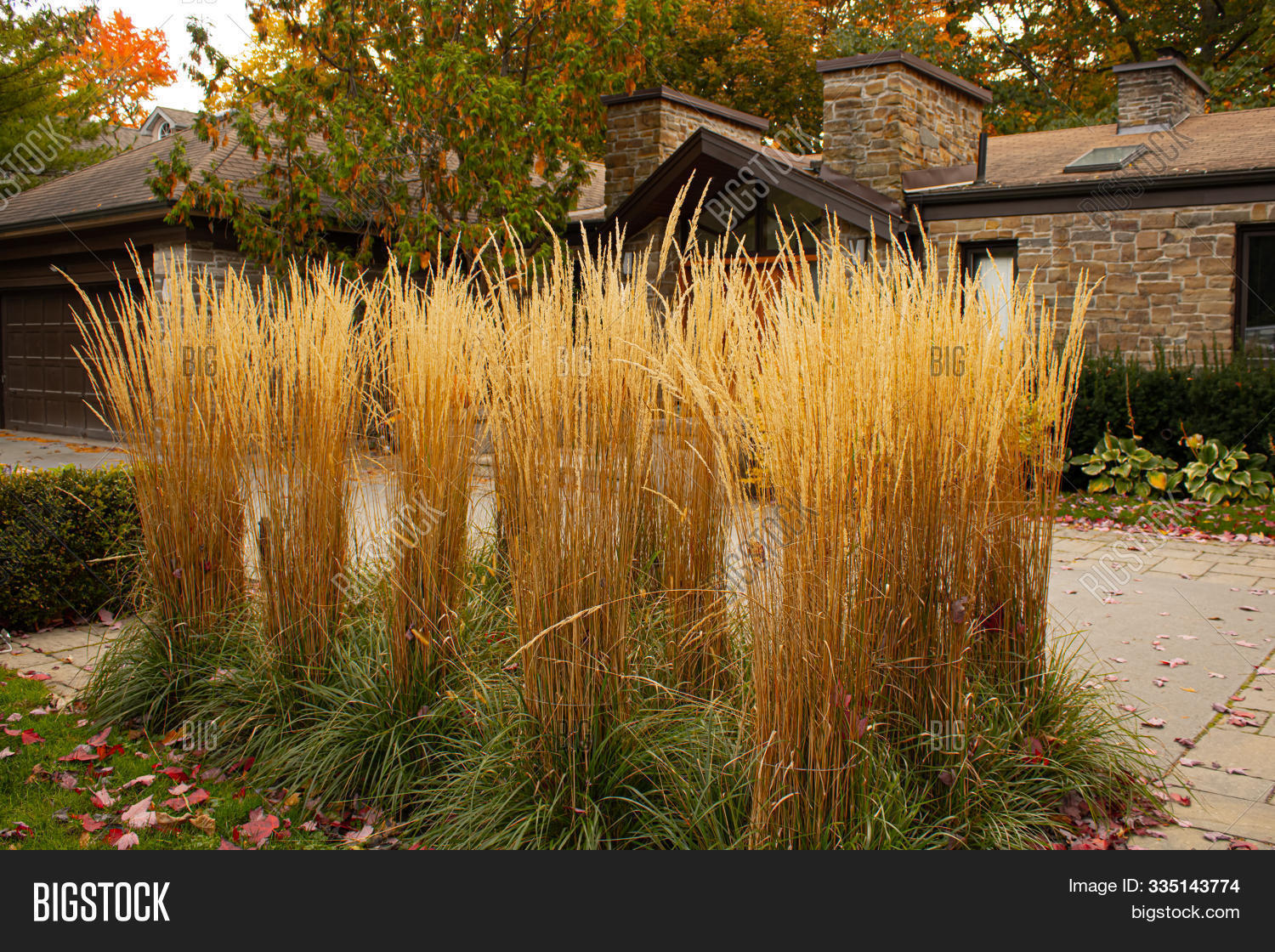 Feather Reed Grass Image Photo Free Trial Bigstock