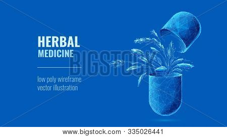 Herbal Medicine. Eco Capsule Pills With Organic Herbs. Futuristic Low Poly Wireframe Digital Vector