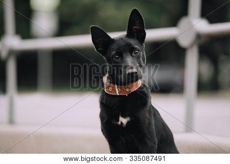 Cute Black Mutt Puppy Portrait Outdoors In Summer
