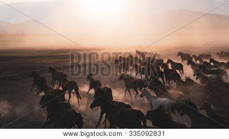 Kayseri, Turkey - November 2019: Horses Running And Kicking Up Dust. Yilki Horses In Kayseri Turkey