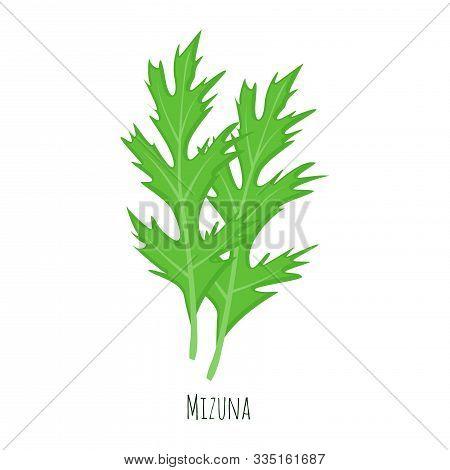 Mizuna Green Salad Leaves Vector Illustration Isolated On White