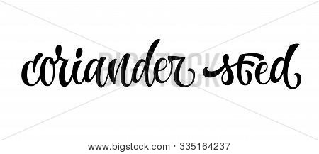 Hand Drawn Spice Label - Coriander Seed. Vector Lettering Design Element. Isolated Calligraphy Scrip