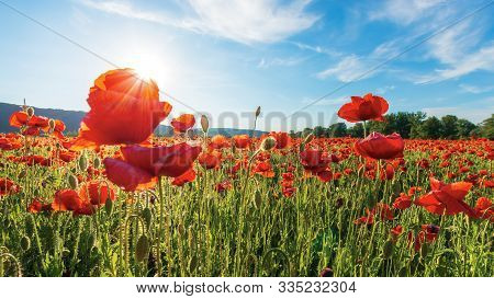 Poppy Field On A Sunny Afternoon. Beautiful Rural Scenery With Red Flowers In Mountains. Bright Blue