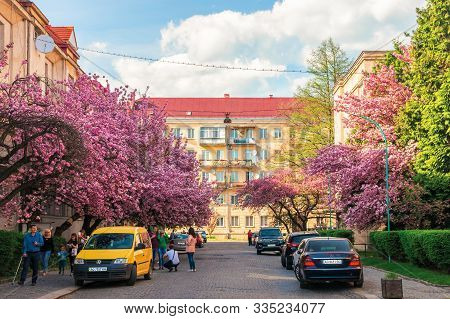 Uzhhorod, Ukraine - 18 Apr, 2019: Streets Of Small Town In Cherry Blossom. Wonderful Sunny Afternoon