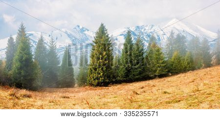 Fir Trees On The Grassy Hillside On Foggy Morning. Snow Capped High Tatras Ridge In The Distance. Wo