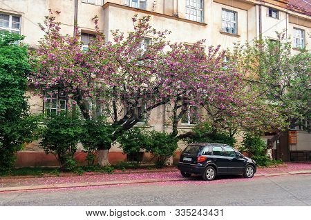 Uzhhorod, Ukraine - 02 May, 2010: Black Compact Suv Car Under The Cherry Tree In Blossom. Typical Sc