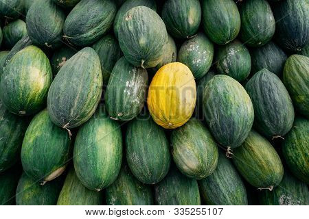 One Yellow Melon Among Many Big Sweet Green Melons