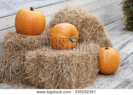 Three Yellow Pumpkins Lies On Hay Bales. Farm Green Product. Pumpkin Autumn, Concept Of Halloween An