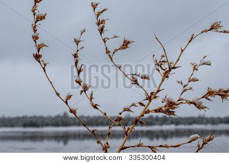 Ice On Winter Branches At The Lake