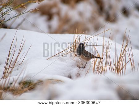 Small Bird On The Ground In Snow