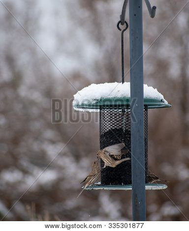 Two Birds At A Bird Feeder In The Snow