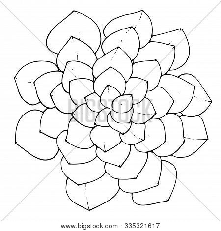 Vector Succulent Floral Botanical Flower. Black And White Engraved Ink Art. Isolated Succulents Illu