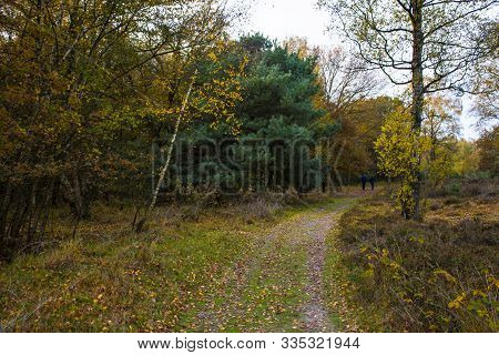 Way In The Park In Autumn. Fall Forest Landscape.