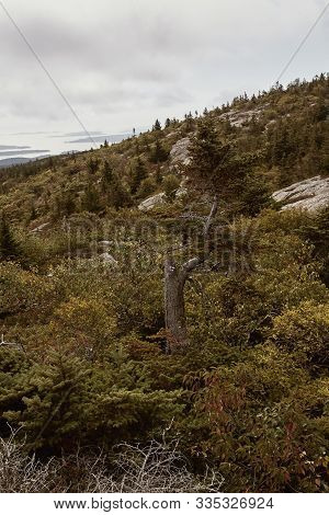 Hiking Through Shrubbery Along Granite Bedrock At The Summit Of Cadillac Mountain In Acadia National