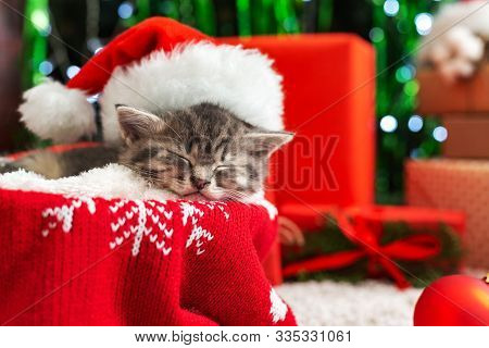 Sleeping Christmas Cat. Beautiful Little Tabby Sleeping Kitten, Kitty, Cat In Red Santa Claus Hat Ne